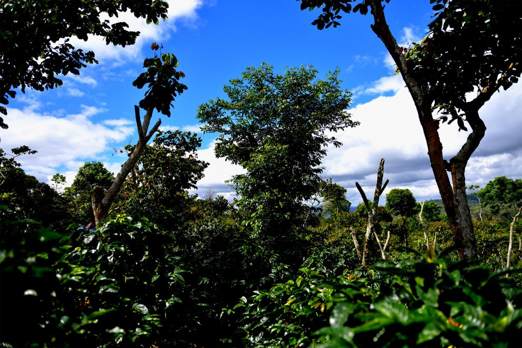 ニカラグア サンタマウラ農園